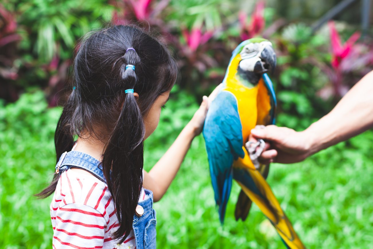 Little girl petting a bright yellow and blue parrot