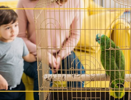 Housing Options for Pet Birds