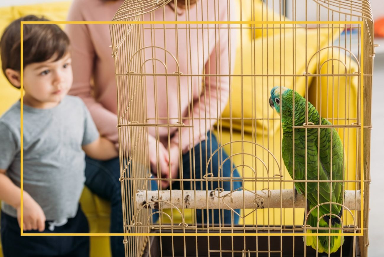 Little boy and mom sitting on couch. Little boy staring at bird inside a bird cage