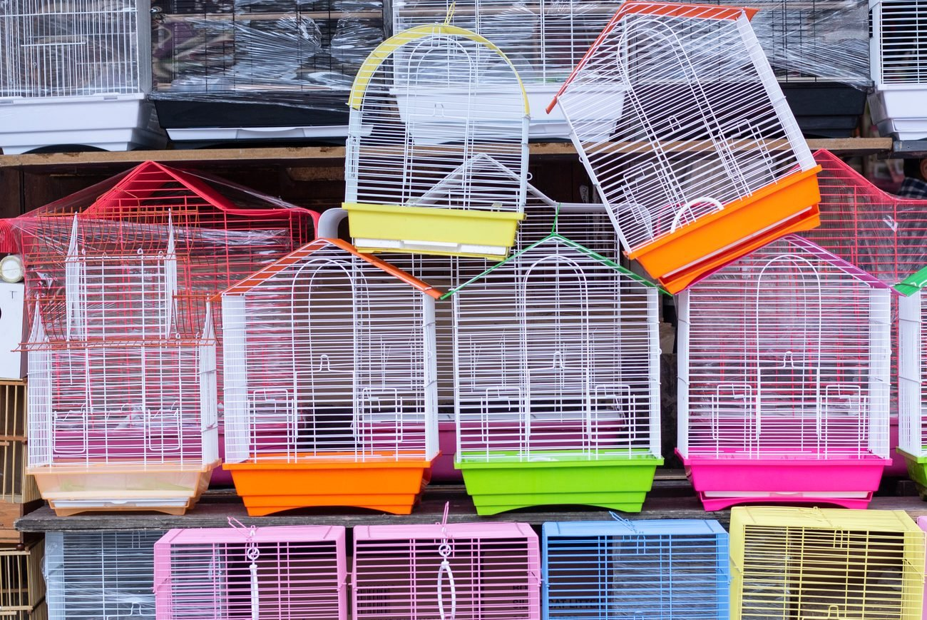 Picture of multiple colorful bird cages