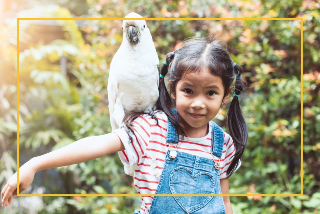 Little girl holding a big white parrot on her shoulder