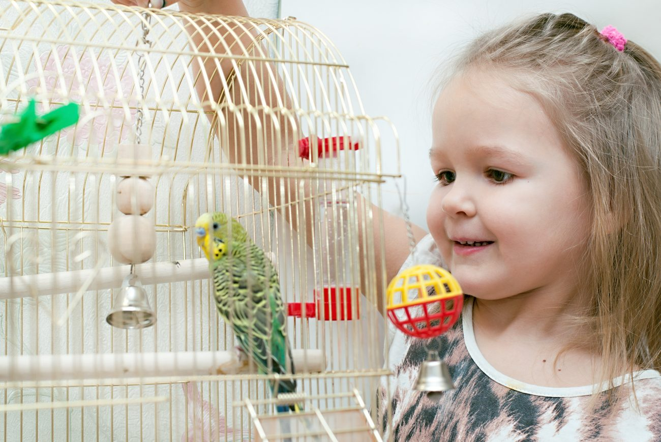 Little girl playing with a parrot in a bird cage