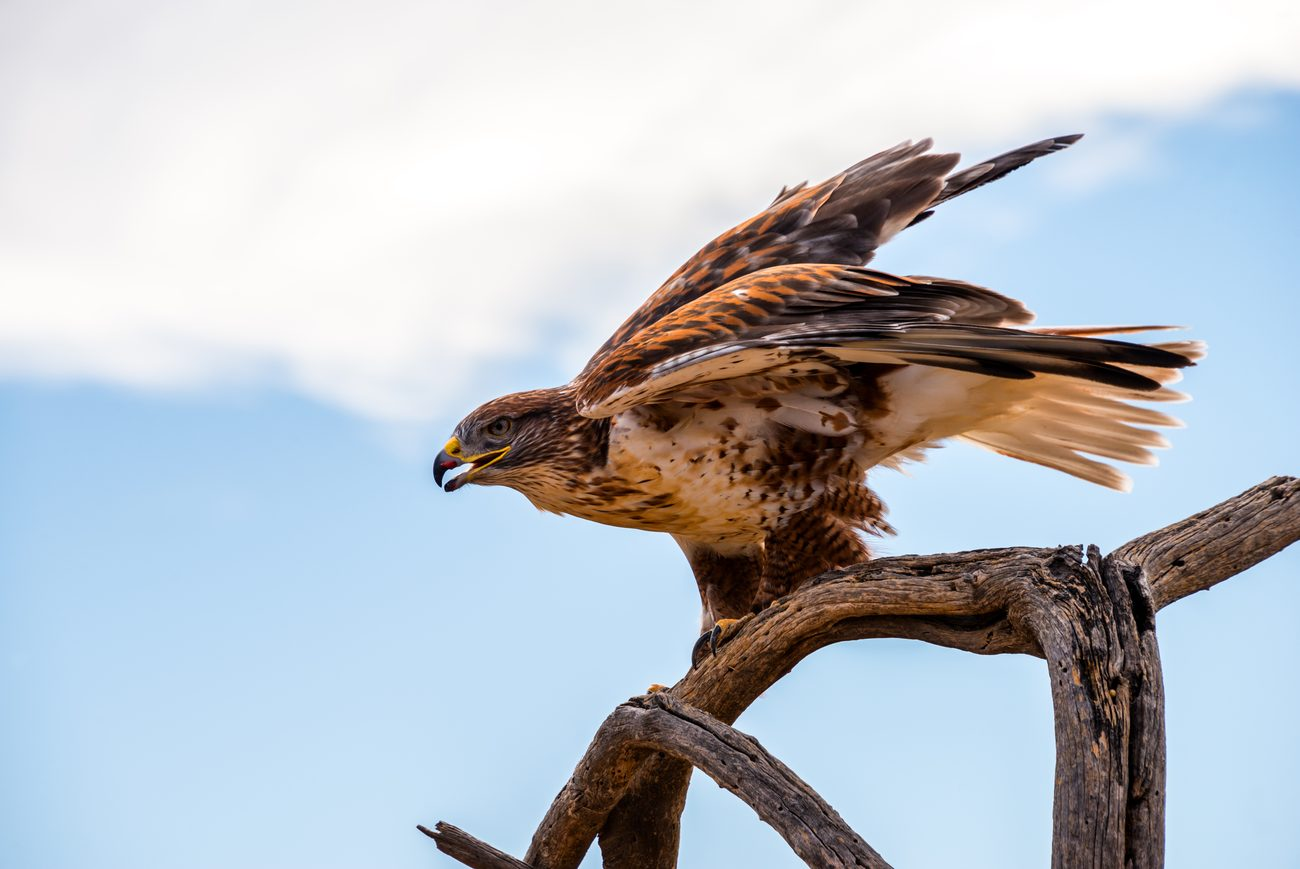 a hawk looking to the side and sitting on top of a tree branch