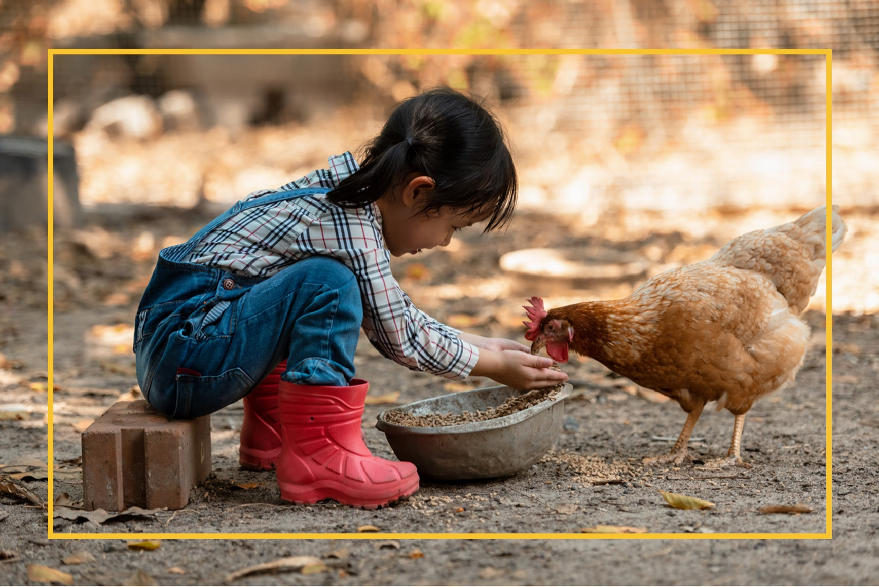 Little girl feeding chicken from her hands