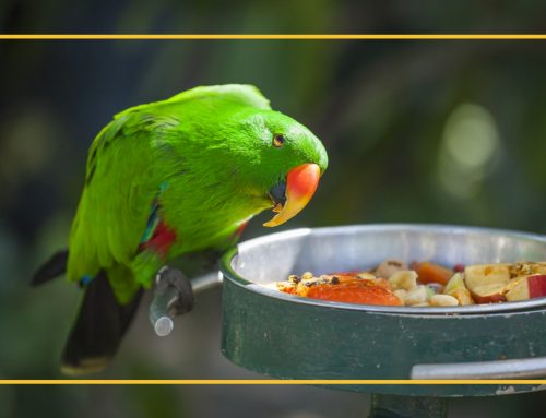 Nutrition For Pet Birds – Proper Diet Is Critical To Health