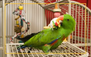 Parrot in cage playing with toys
