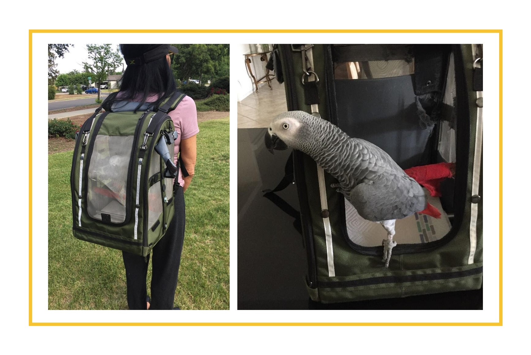 Parrot in specially designed carry backpack