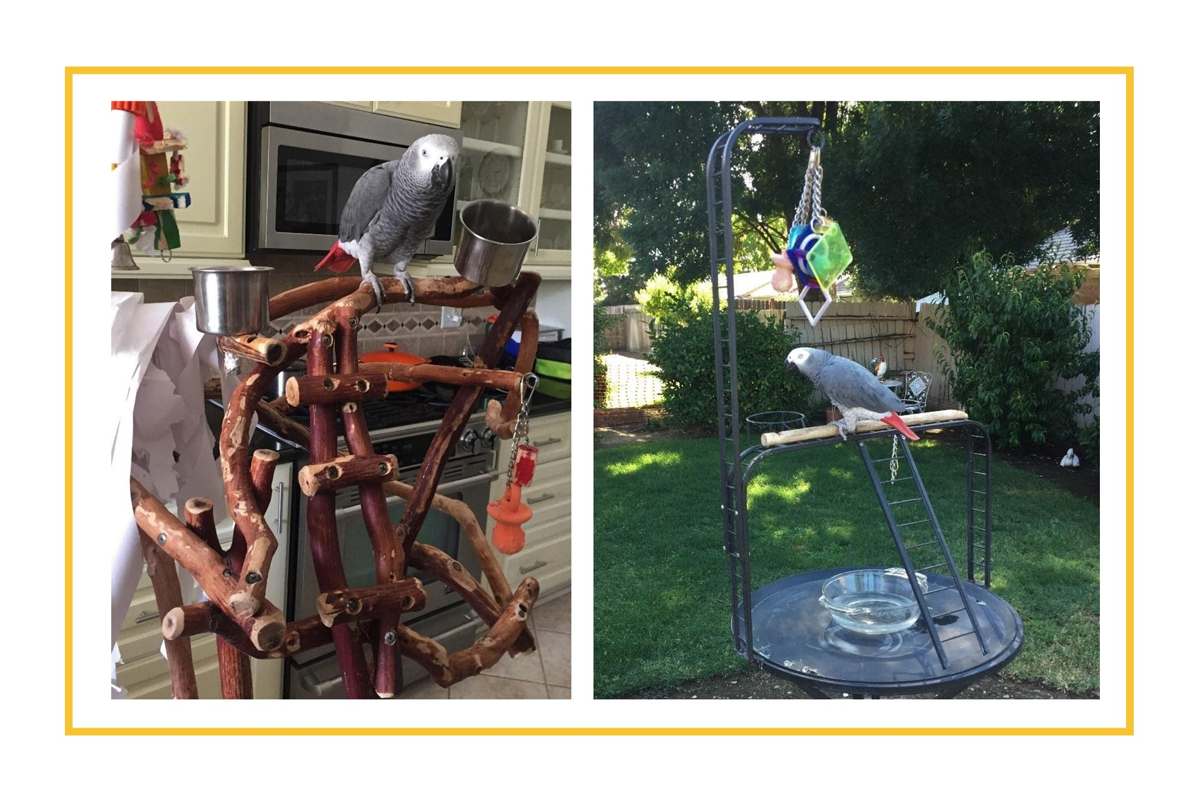 Two photos of parrot on tree stand with toys-inside and outside of the home