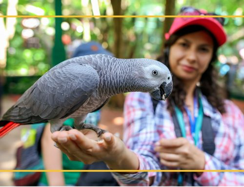 Experiencing the Bird Blues? Advice for Avoiding and Addressing Behavioral Issues in Pet Parrots from an Experienced Parrot Parent