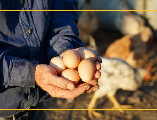 Considerations for Selling Eggs