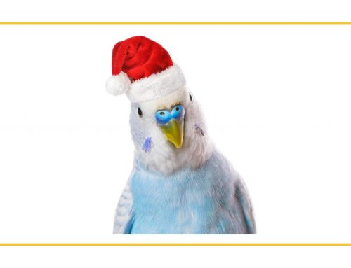 Pet Bird Safety: Holiday Hazards